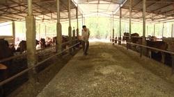 Đồng Nai: Mô hình nuôi bò vỗ béo có gì đặc biệt mà nông dân nơi đây, nhiều người đã trở thành tỷ phú?