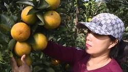 """Phú Thọ: Trồng thứ cây ra trái ít hạt lại """"ngọt lên ngọt xuống"""", nông dân này thu nửa tỷ mỗi năm"""