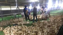 """Giá gia cầm hôm nay 22/3: Giá gà công nghiệp """"rơi"""" mất """"đầu 2"""", vịt thịt miền Bắc bất ngờ giảm"""