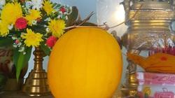 Vĩnh Long: Giật mình trái dưa hấu vàng nặng hơn 6kg chưng 47 ngày vẫn không xi nhê, bổ ra ăn vẫn ngọt ngon
