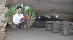 Ông chủ nuôi con đặc sản thu gần 7 tỷ đồng/năm bật mí chuyện làm giàu trong hang tối ở Hòa Bình