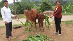 Quỹ HTND kỷ niệm 25 năm thành lập, nhận Huân chương Lao động hạng Nhất: 25 năm đồng hành, giúp nông dân làm giàu