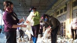 """Giá gia cầm hôm nay 23/3: Vịt thịt về chợ dồn dập, người mua thưa thớt, giá gà thả vườn """"ấm"""" dần"""