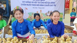 Tập đoàn Mavin phối hợp World Vision triển khai mô hình nuôi vịt siêu nạc theo chuỗi giá trị tại Thanh Hóa
