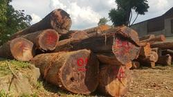 Vụ mất 22.000 ha rừng tại 4 công ty lâm nghiệp: Sở NNPTNT Đắk Lắk nói gì?