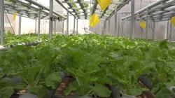 Đồng Tháp: Phát triển kinh tế từ niềm đam mê trồng rau sạch