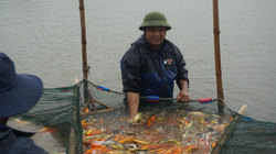 """Nam Định: Nuôi loài cá """"sang chảnh"""", có con dài gần 1 mét, bán giá nghìn đô, 8X này thu tiền tỷ"""