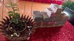 Bí thư Tỉnh ủy Hòa Bình yêu cầu UBND tỉnh chỉ đạo kiểm soát, các hoạt động giao dịch hoa lan đột biến gen
