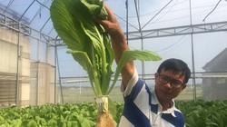 Quảng Bình: Trồng rau thủy canh, trồng đến đâu chị em tập yoga đến mua sạch đến đó
