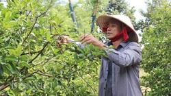 """""""Bà đỡ"""" mát tay cho các mô hình nông nghiệp công nghệ cao ở Bình Dương"""