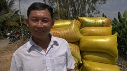 Đồng Tháp: Giá lúa liên tục tăng, lúa gì cũng tăng, lâu lắm nông dân trồng lúa mới vui như Tết
