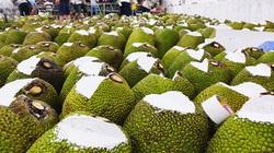 Giá mít Thái hôm nay 27/3: Giá mít giảm nhiều, nông dân chỉ mẹo trồng mít Thái xanh tốt ngày nắng nóng, xâm nhập mặn