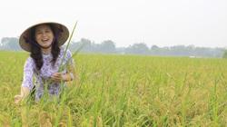 Giá lúa gạo hôm nay 28/3: Giá gạo xuất khẩu cao nhất trong 9 năm, nông dân lãi chưa từng có