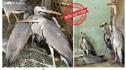 Bộ TNMT lấy ý kiến 9 Bộ ngành và 63 tỉnh thành về giải pháp cấp bách để bảo vệ chim hoang dã, di cư