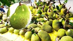 Giá mít Thái hôm nay 29/3: Mẹo hay giúp trái mít không bị lép và méo, giá mít Thái Tiền Giang giảm 10.000 đồng/kg