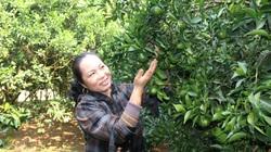 Nông dân Cao Phong phất lên nhờ trồng loại cây này