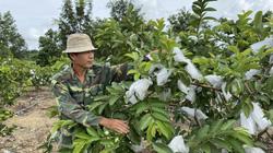 Những vườn cây, trang trại chăn nuôi mang lại hàng trăm triệu, hàng tỷ đồng cho nông dân giỏi