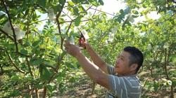 """Thái Nguyên: Quỹ Hỗ trợ nông dân góp phần """"nuôi lớn"""" những trang trại giàu có"""