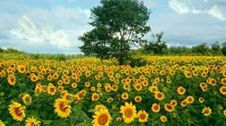 Thủ tục chuyển đổi mục đích sử dụng đất nông nghiệp sang đất phi nông nghiệp mới nhất
