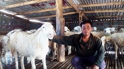 Ninh Thuận: Một xã của huyện Bác Ái nuôi hơn 11.400 con dê, cừu, xã đang lo dê, cừu mắc triệu chứng gì?