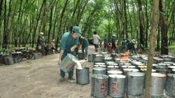 Chỉ một động thái của Trung Quốc, xuất khẩu loại nông sản này bất ngờ tăng 116%