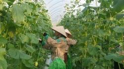 Quảng Ninh tham vọng trở thành hạt nhân ứng dụng nông nghiệp công nghệ cao