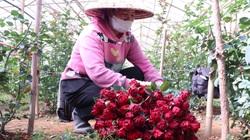 """Hoa Đà Lạt tăng giá trước 8/3, dân phấn khởi """"vớt vát"""" mùa Covid-19"""