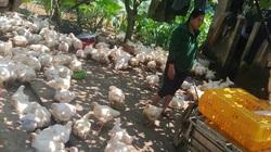 Giá gia cầm hôm nay 5/3: Cập nhật giá các loại gà, vịt mới nhất tại các vùng