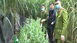 Lạng Sơn: Phát hiện hai anh em trồng hàng trăm cây thuốc phiện trong vườn nhà