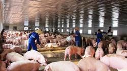 Từ tháng 4, xử lý chất thải chăn nuôi không đúng quy định, sẽ bị phạt đến 20 triệu đồng