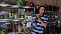 Đà Nẵng: Lên rừng tìm cắt những loài cây hoang dại, ai ngờ một ông nông dân lại đổi đời