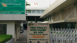 """Vụ án tại Tổng Công ty Nông nghiệp Sài Gòn: """"Nhúng chàm"""" vì nể nang """"em trai nguyên Bí thư Thành ủy TP.HCM"""""""