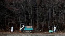 Phóng xạ từ thảm họa Fukushima không gây ra ung thư?