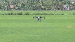 Máy bay không người lái tham gia sản xuất lúa tại Đồng Nai