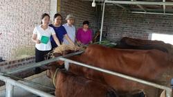 Các mô hình trồng trọt, chăn nuôi ở Hà Nội được vay vốn ưu đãi mang lại hiệu quả kinh tế cho nông dân