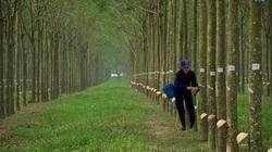 Vì sao Trung Quốc tức tốc gom đến 99% lượng nông sản xuất khẩu này của Việt Nam?