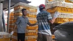 """Giá gia cầm hôm nay 1/4: Giá vịt thịt vọt lên 60.000 đồng/kg, người nuôi vịt phấn khởi vì """"lãi to"""""""