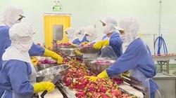 Vượt qua Covid-19, kim ngạch xuất khẩu nông, lâm, thủy sản Việt Nam tăng mạnh trong quý I/2021