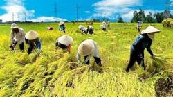 Điều kiện chuyển nhượng đất trồng lúa năm 2021