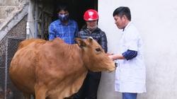 Lên Facebook đăng tin hạn chế ăn thịt trâu bò do bệnh viêm da nổi cục, coi chừng bị phạt tiền