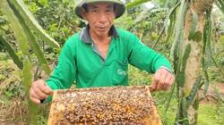 """Nuôi loài côn trùng lấy mật, lão nông Hà Tĩnh """"bỏ túi"""" hàng trăm triệu mỗi năm"""
