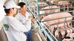 Hưởng lợi nhờ giá lợn hơi đạt mức cao lịch sử, C.P Việt Nam thu về 3,4 tỷ USD trong năm 2020