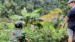 """Video điều tra: Cây cổ thụ """"tài sản quốc gia"""" bị rao bán thản nhiên như cây vườn nhà"""