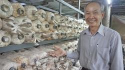Đà Nẵng: U60 làm giàu nhờ trồng vô số các loại nấm