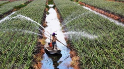 Năm 2021, trường hợp nào bị cấm sang tên sổ đỏ đất nông nghiệp?