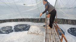 Thái Bình: Nuôi tôm dày đặc trên ao nổi, 1 năm 3 vụ, nuôi đâu trúng đấy, dân vùng này khá giả hẳn lên