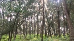 Nóng: Thi thể nam giới thảm thương trong rừng thông với nhiều vết đâm