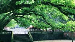Nghệ An: Chùa Song Ngư cổ kính 800 năm tuổi-nơi neo giữ tâm hồn của người dân vùng biển Cửa Lò