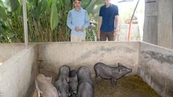 """Nuôi đàn lợn đen xì, tên nghe """"mắc cười"""" nhưng nông dân toàn bán giá 100.000 - 150.000 đồng/kg"""