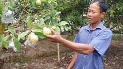 """Thái Bình: Anh nông dân trồng """"lung tung"""", trên bờ đủ thứ cây, dưới ao nuôi đủ thứ con, sơ sơ lãi nửa tỷ/năm"""